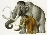 El mamut chiquito